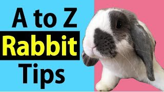 Rabbit Tips Dictionary A to Z (Golden Tip Included)- Top 30 Tips