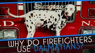 Why did firefighters use Dalmatians?