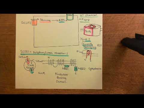 Brei arnautka Diabetes