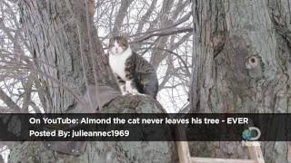 Almond the Cat Never Leaves His Tree Ever Explained