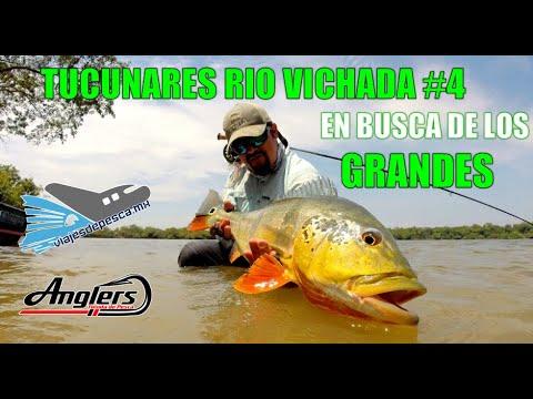 TUCUNARES RIO VICHADA #4 / En Busca de los Grandes / Monster Peacock Bass.