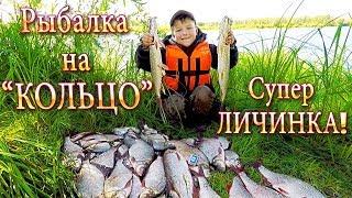 Август! Рыбалка на КОЛЬЦО! Отличный Улов -Первый день! р.Чулым!