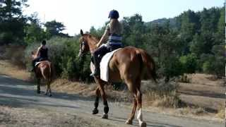 preview picture of video 'Horse Ride at Ride in Cyprus 27 July 2012'