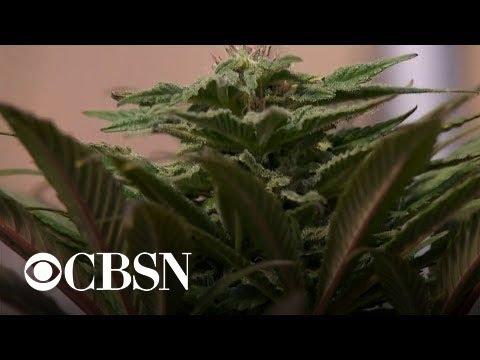 Proposed bill would decriminalize marijuana at federal level