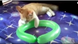 Коты и воздушные шары (Cats and balloons)