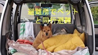 避難所でペットと同行避難