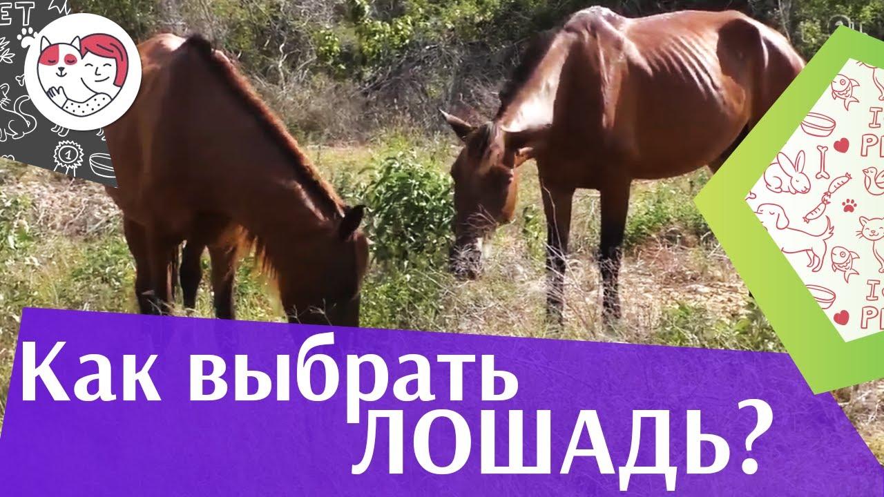 5 правил выбора лошади, на ilikepet