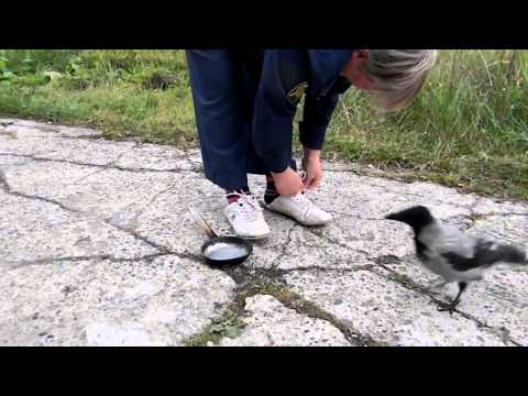 Crow distracts a woman so he can steal her shiny pan