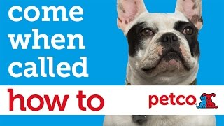 How to Train Your Dog to Come When Called (Petco)