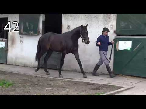 Lote ESSAYONS TOUCH