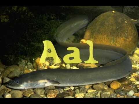 Der Fisch sich die von den Würmern nicht ansteckt