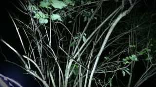 "Hedley ""Anything"" - Lyric Video"