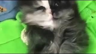 Котики как дети) Милая смешная подборка