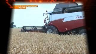 Первые 500 тысяч тонн зерна