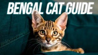 ULTIMATE Guide to Bringing home YOUR BENGAL CAT!