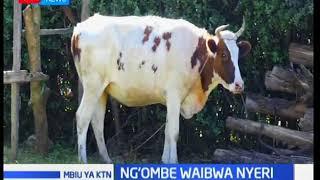 Ng'ombe waibwa Nyeri na kusafirishwa kwenye matatu