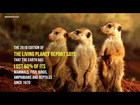 Earth has lost 60 per cent of its animals since 1970