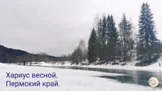 Рыбалка в пермском крае ранней весной
