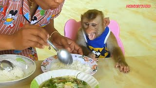 Adorable Monkey Kako Crying Loudly Can't Wait Mom Feed Him