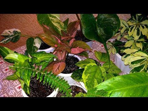 Очередная перевалка разнообразных комнатных растений