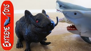Giant Rat Attack! Scary Rat Toy Attacks the Boys and the Shark Toys.