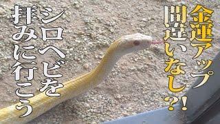 見れば開運アップの白蛇がハート型に!?