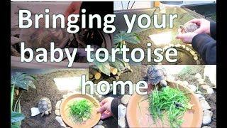 Bringing your baby tortoise home   happytortoises