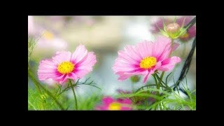 Morning Relax Music   Background Music for Stress Relief
