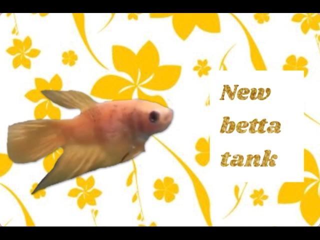 New 1.5 gallon betta fish tank setup: Paris Jean