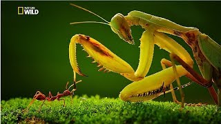 Strangest Insects in the World New Documentary HD 2017