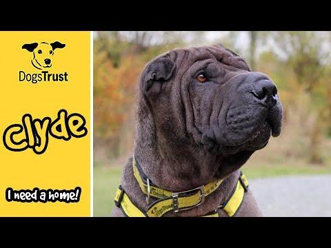 Meet Clyde! | Dogs Trust Basildon