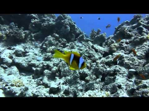 Tauchen im Roten Meer, Sharm el Sheikh - allgemein,Ägypten