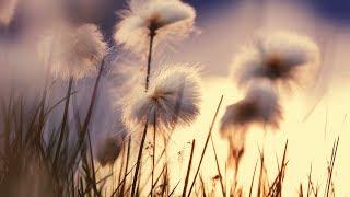 Morgenmusik Für Positive Energie   Leichte Instrumentalmusik Für Die Stimmung Erheben