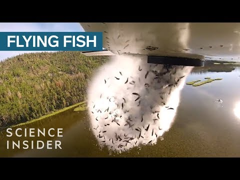 Fish Dumping - Why is this Bizarre Practice Necessary?