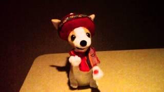 Christmas Chihuahua sings Donde Esta Santa Claus
