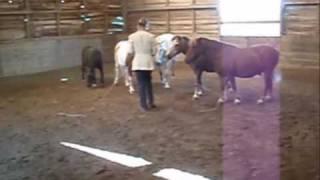 L'Ecole du cheval - SAINT HILAIRE DES LOGES
