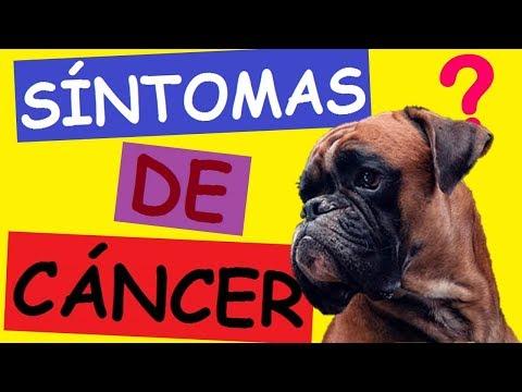 Cancer bucal en perros