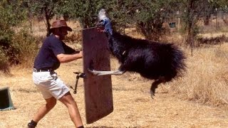 12 INSANELY Dangerous Animals In Australia!