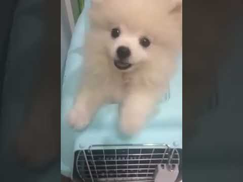 Puppy Pops Out of it's Cage #short
