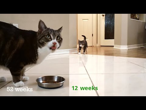 Kitten Time Lapse - 1 Year In 2 Minutes! Mp3