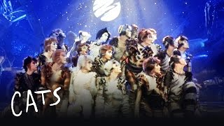 The jellicle ball cats the jellicle ball dance cats the musical stopboris Image collections