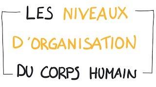 Neuroscience : Les niveaux d'organisation du corp humain
