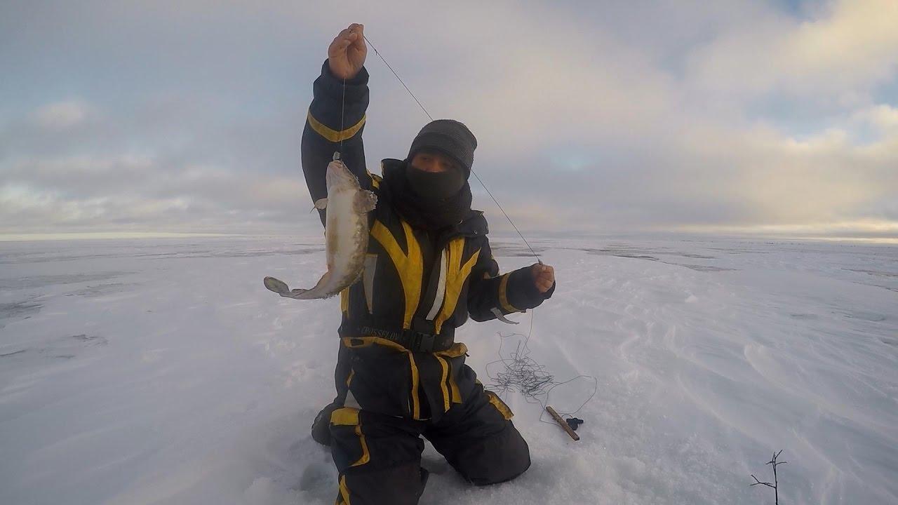 Ловля налима на Онежском озере зимой