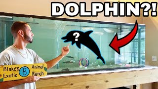 PET BABY DOLPHINS IN FRESHWATER HOME AQUARIUM!!