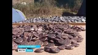 В древней Фанагории археологи обнаружили крупный клад