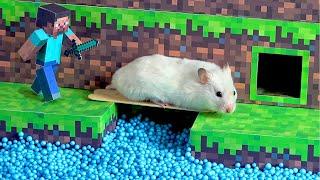Hamster Minecraft Maze