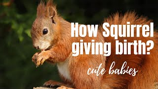HOW A SQUIRREL GIVING BIRTH - (CUTE BABY SQUIRREL)