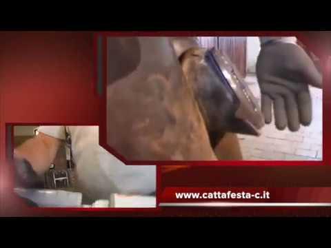 Protezione della Suola del Cavallo