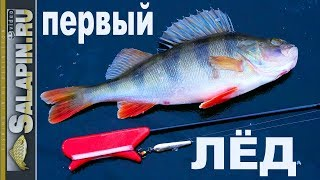 Фото окунь на зимней рыбалке