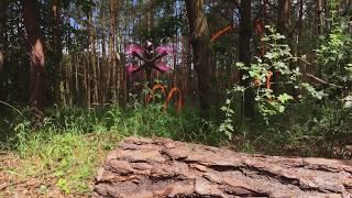 Forest Race Track DVR - DJI HD FPV